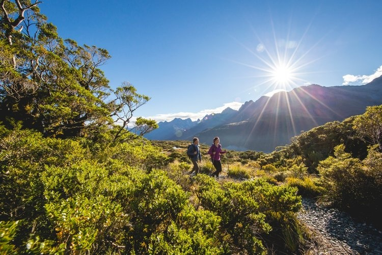 Hiking-new-zealand-forest