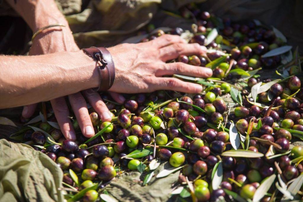 Olives_New_Zealand_Artisan_Food-1024x682.jpg