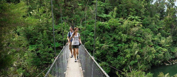 new-zealand-forest-hiking