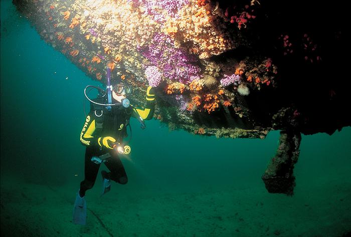 ocean-diving-new-zealand