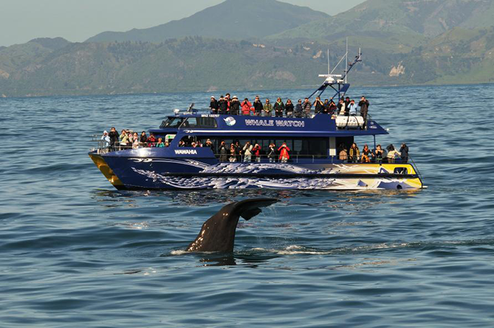 whale-watching-new-zealand