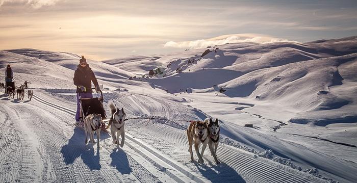 New-Zealand-Dog-Sledding-6