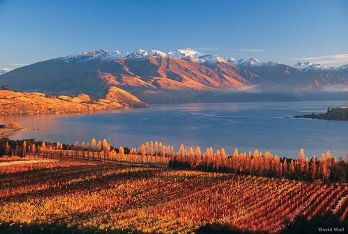 Rippon-Vineyard-Lake-Wanaka-New-Zealand.jpg