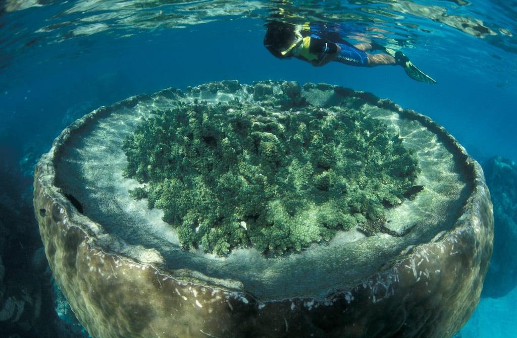 Sal-Salis_Ningaloo-Reef_Blue-Lagoon-snorkel-area