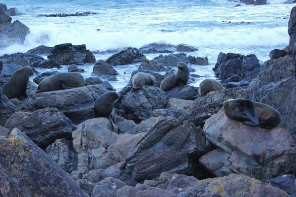 Sinclair Head Seals