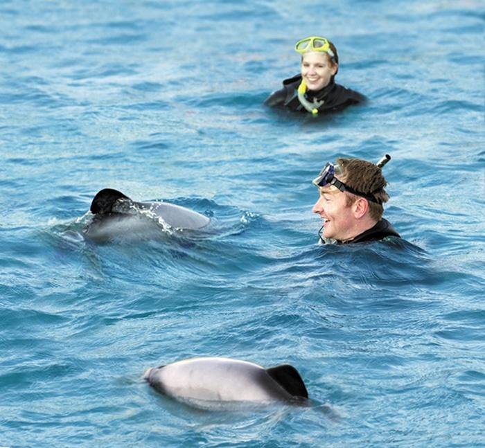 new-zealand-dolphin-swimming