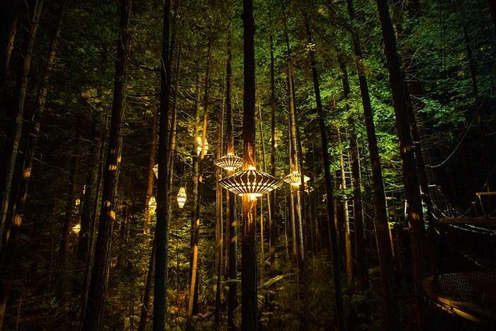 redwoods-first-new-zealand-nightlights