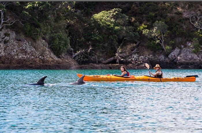 waiheke-island-kayaking