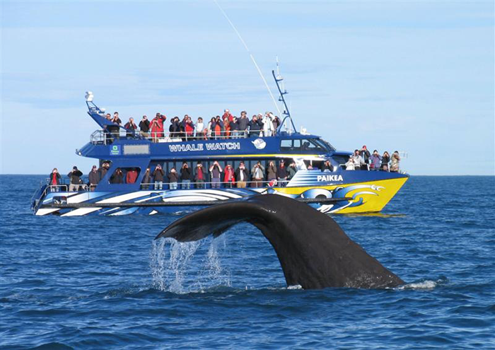 New-Zealand-Whale-Watch-Kaikoura