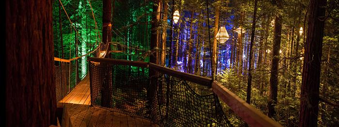 redwoods-rotorua-night