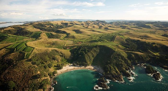 waiheke-island-vineyard
